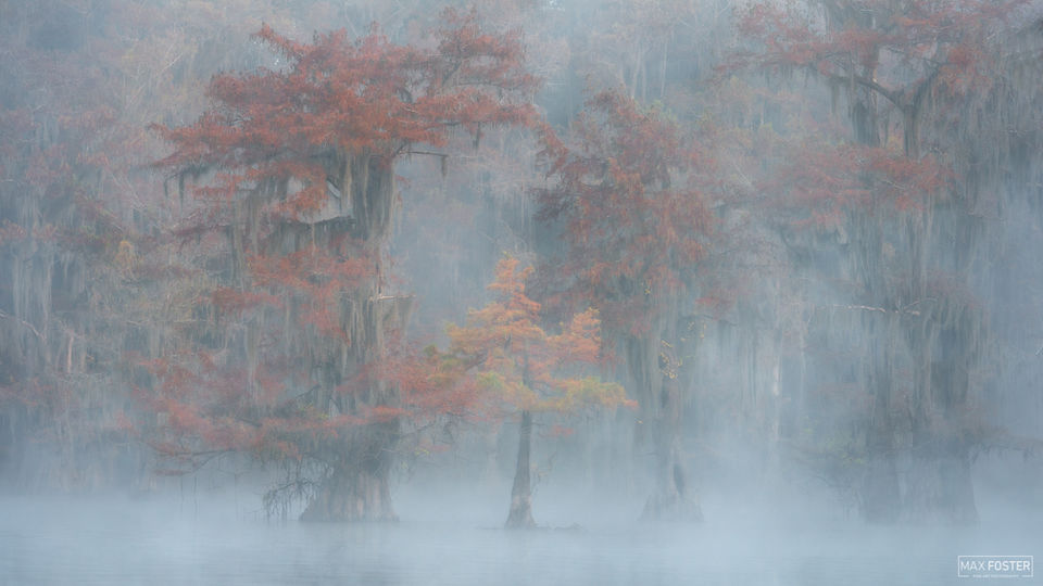 Caddo Lake, Texas, Nature's Mystery, Louisiana