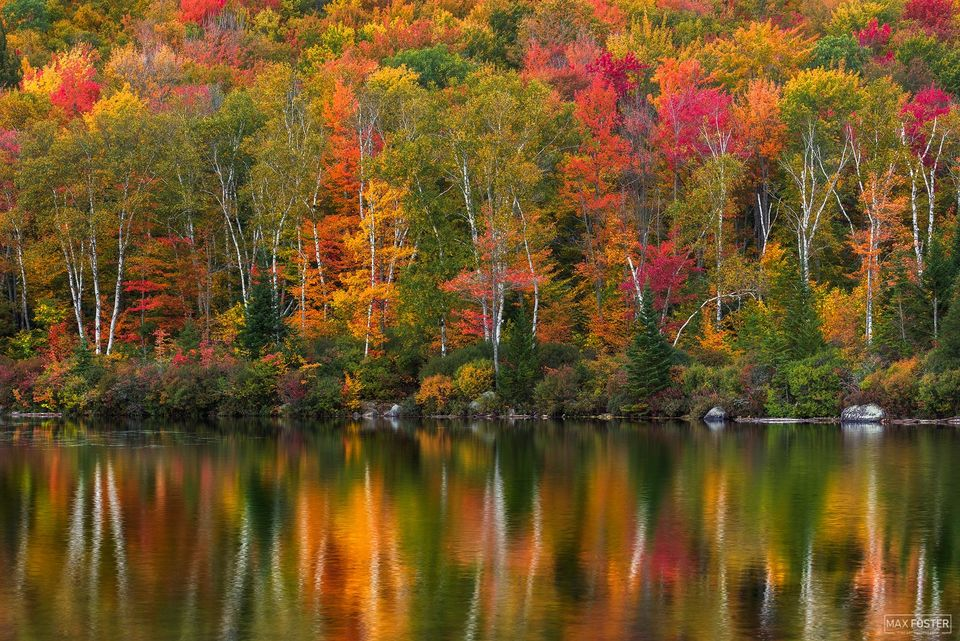 Groton State Forest, Vermont, Leaf, Reflections of Change, Fall Foliage, Trees, Fall Colors, autumn foliage