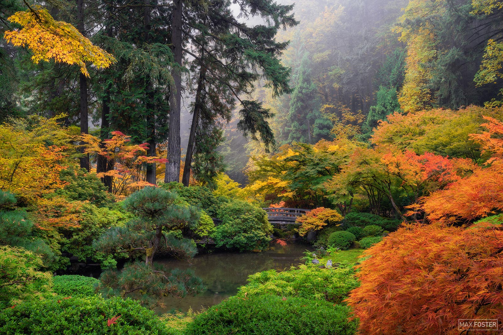 Portland Japanese Garden, Portland, Oregon, Japanese Maple, Tree, A Place of Peace, photo