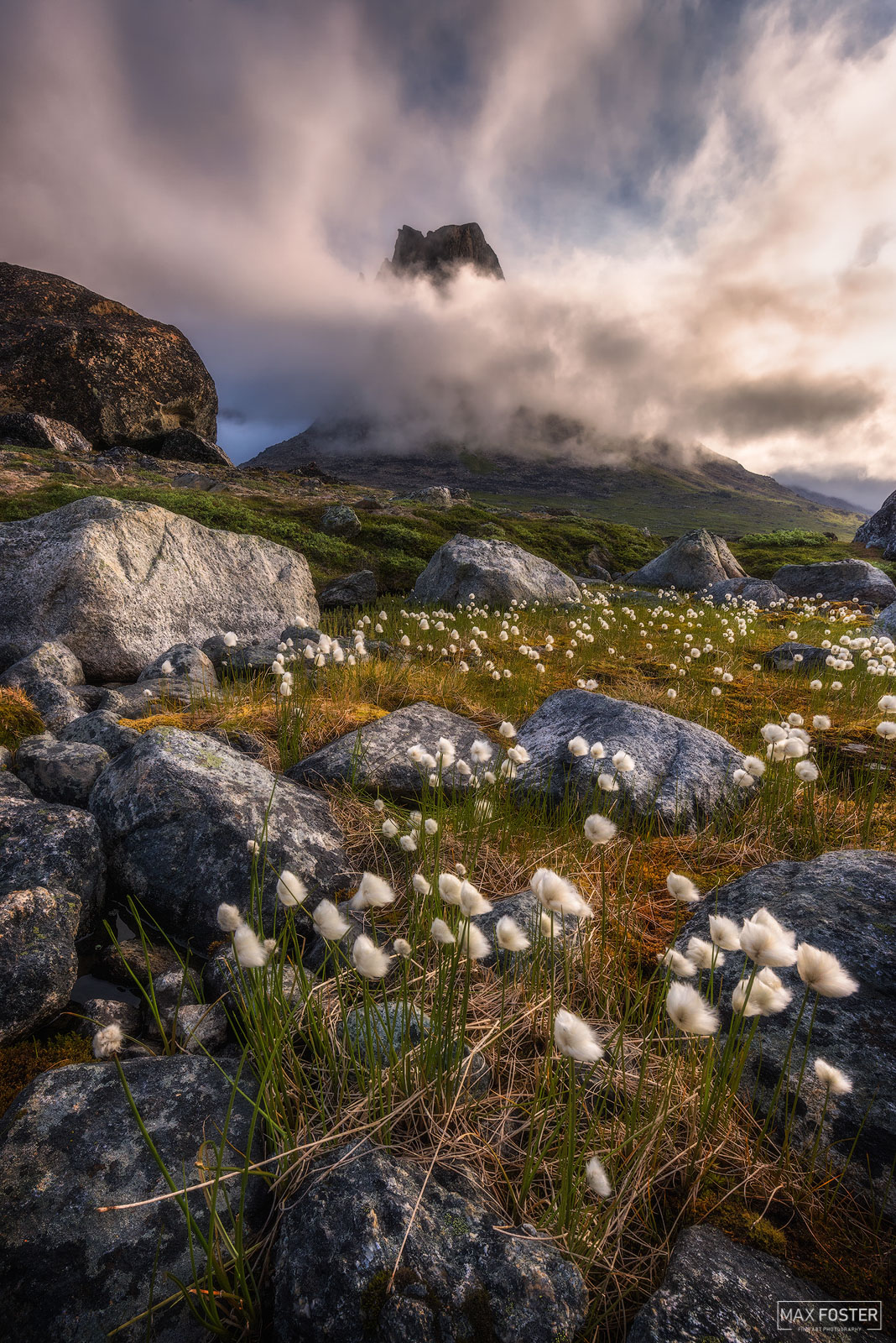 Southern Greenland, Arctic Cotton, Polar Region, permafrost, tundra, Arctic Ocean, photo