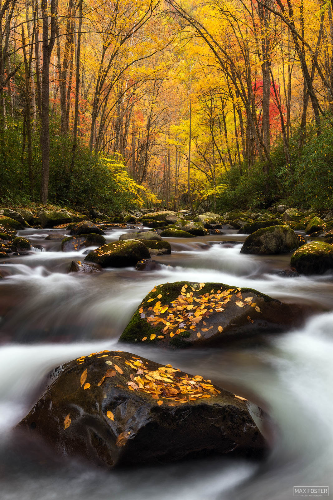 Great Smoky Mountains National Park, Autumn Splendor, Blue Ridge Mountains, Tennessee, North Carolina, Appalachian Trail, Smokey Mountains, photo
