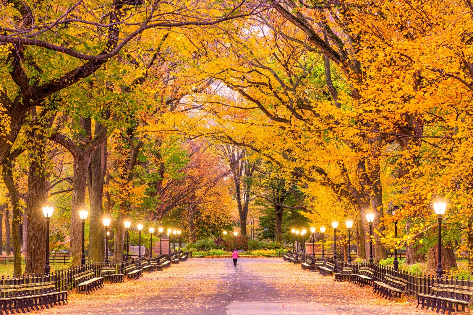 Central Park Mall, New York City, New York.