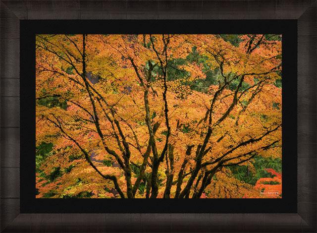 Gallery Ultra+ | TruLife® Lumachrome Acrylic Print | ROMA Frame print preview