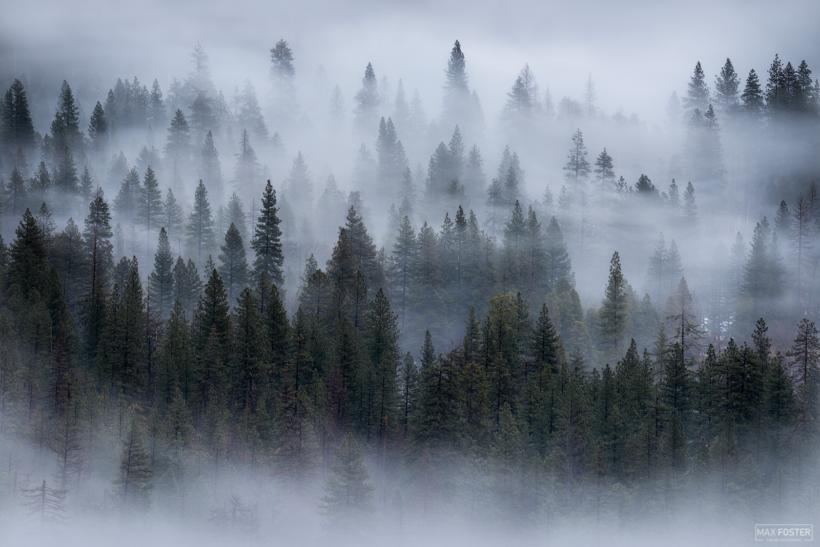 Yosemite National Park, California, Dreamwave, Trees, photo