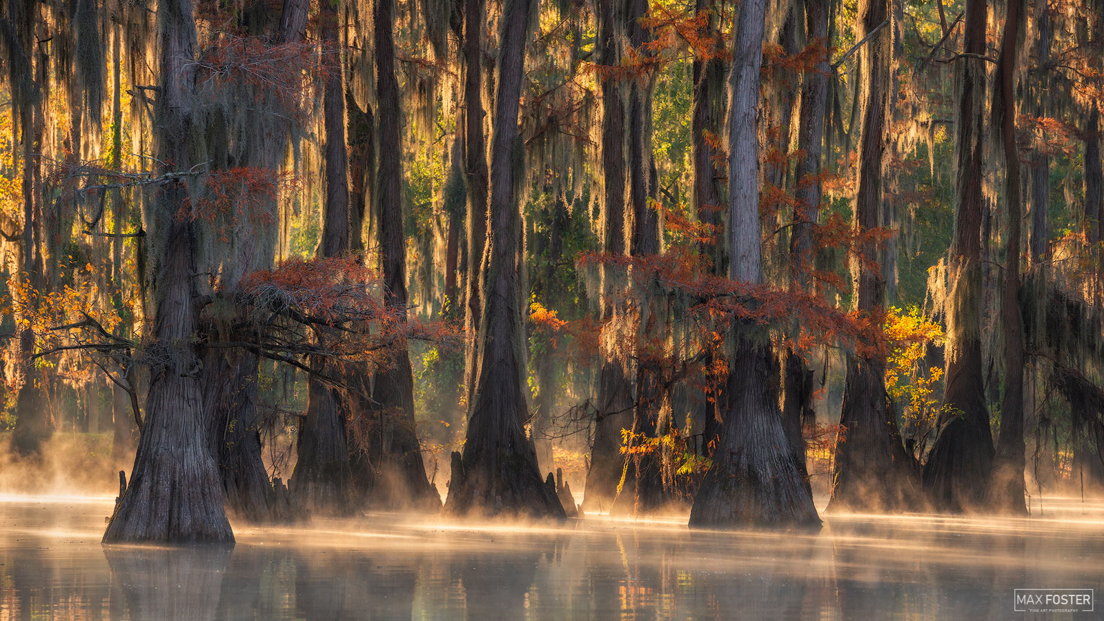 Caddo Lake, Texas, Enlightened, Swamp, photo