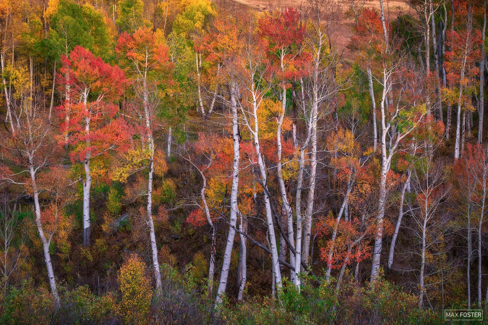 Ridgway, Colorado, Fireworks, Aspen Trees, Autumn, Yellow, Red, Orange, photo