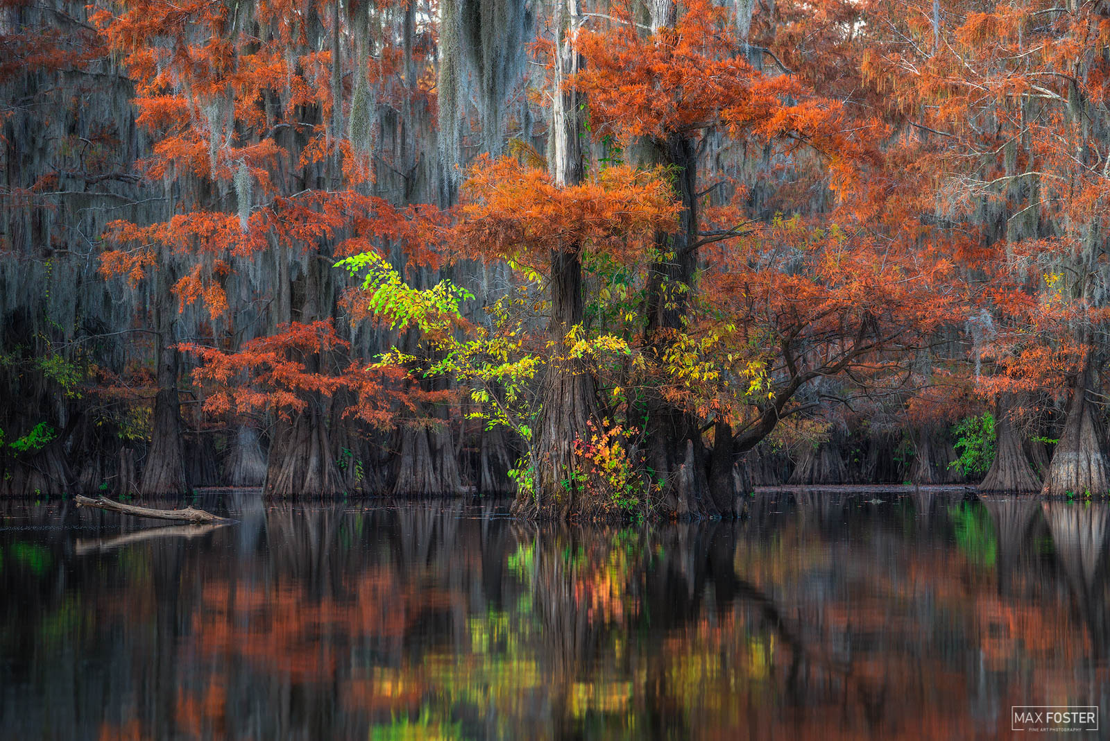 Caddo Lake, Texas, Holding On, Bayou, Southeastern, Cypress, Louisiana, photo