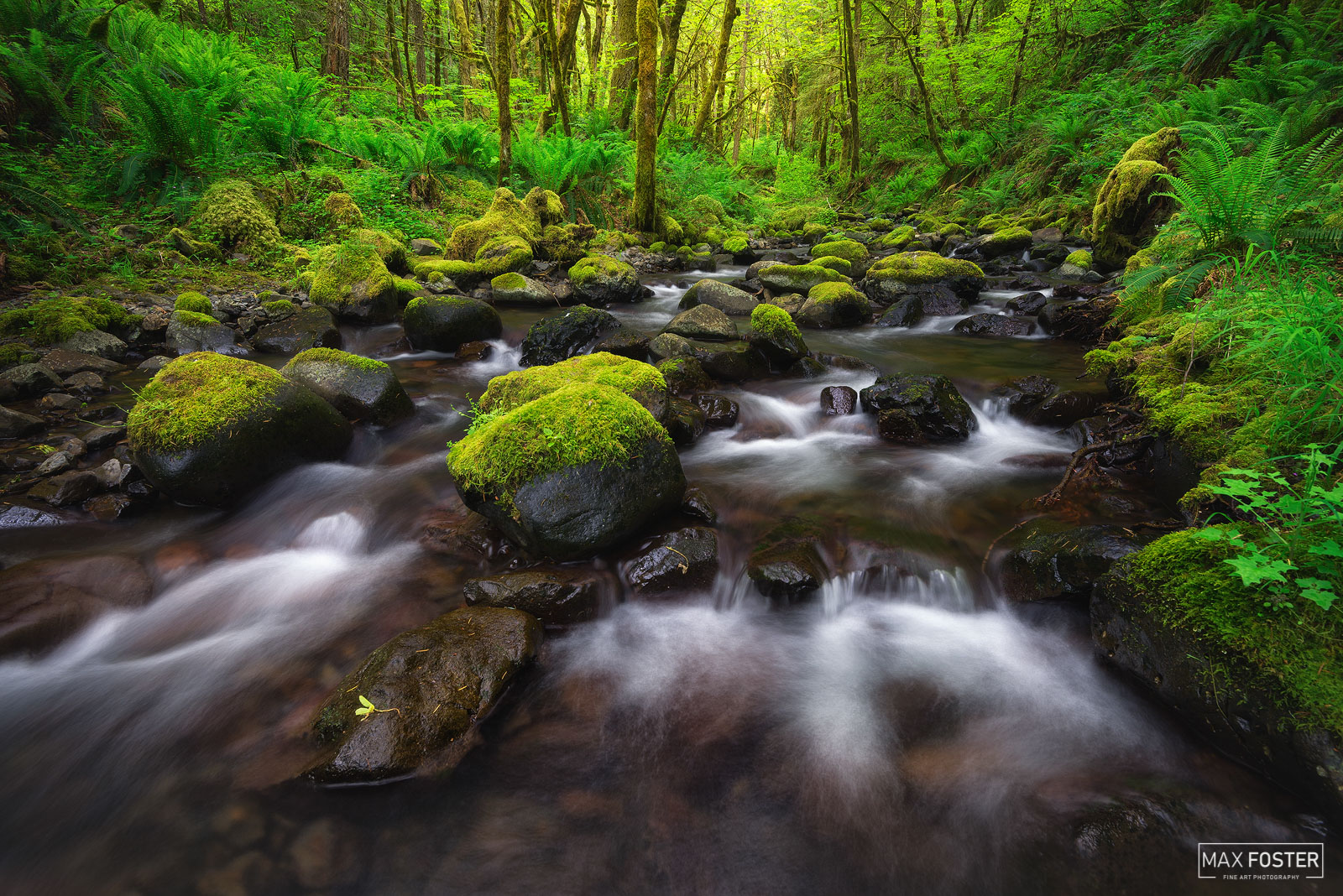 Gorton Creek, Oregon, Lush, Pacific Northwest, PNW, Cascadia, Columbia River Gorge, photo