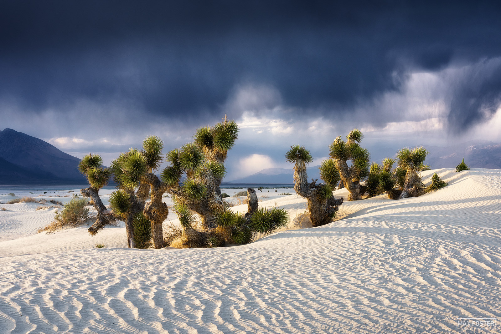 Fine Art Limited Edition of 50 The Mojave Desert is an arid rain-shadow desert and the driest desert in North America. It is...