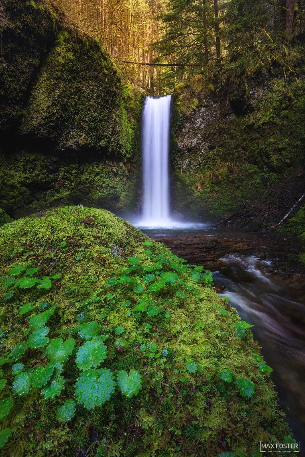 Wiesendanger Falls, Oregon, Columbia River Gorge, Raindrops, Multnomah County, Double Falls, Twanklaskie Falls, photo