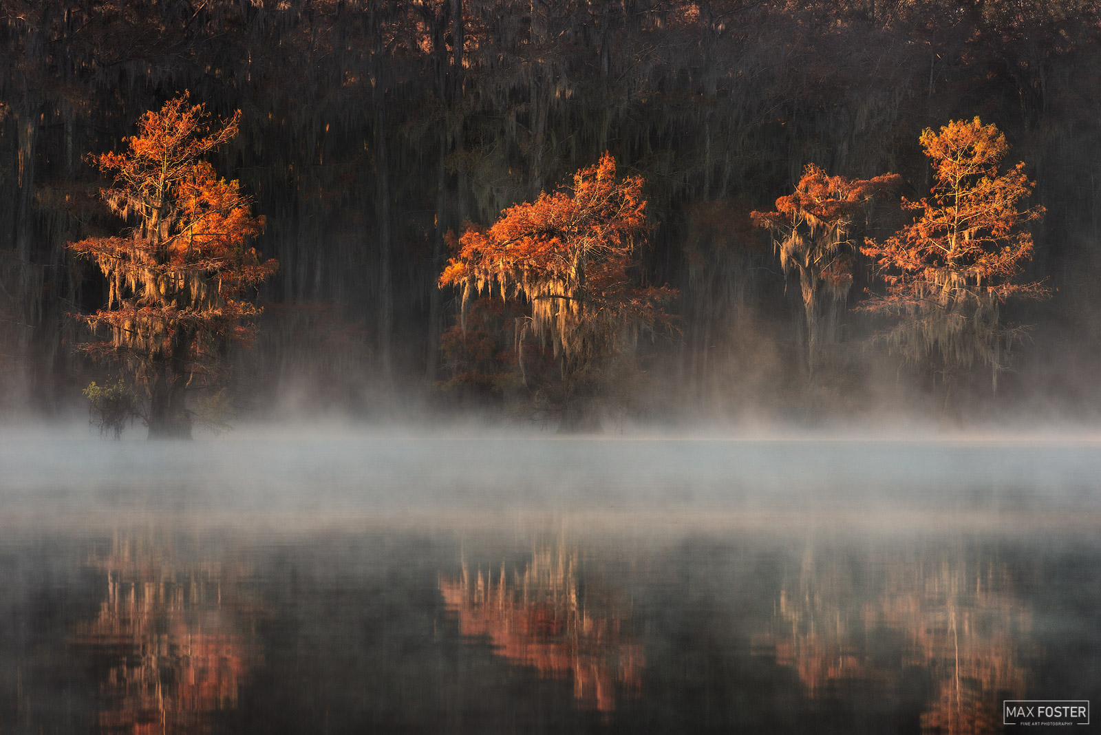 Fine Art Limited Edition of 50 Caddo Lake State Park is a state park located in eastern Texas and operated as a wildlife management...