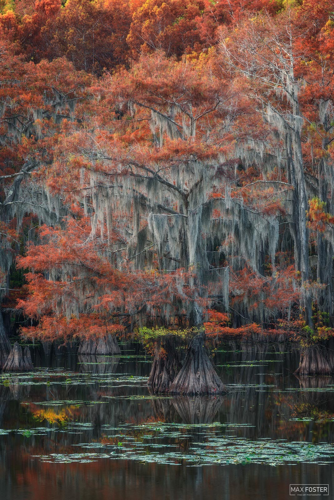 Caddo Lake, Texas, Surreal Canvas, Wetland, Louisiana, photo