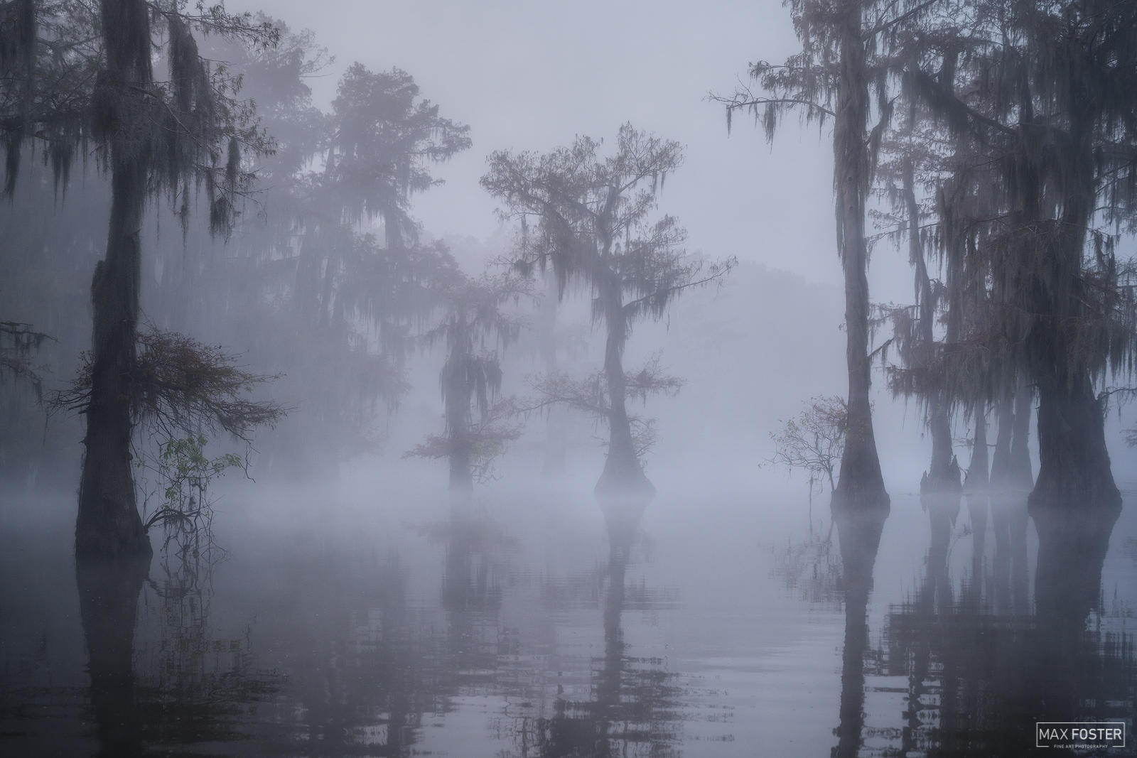 Caddo Lake, Texas, The Illusion, Louisiana, photo