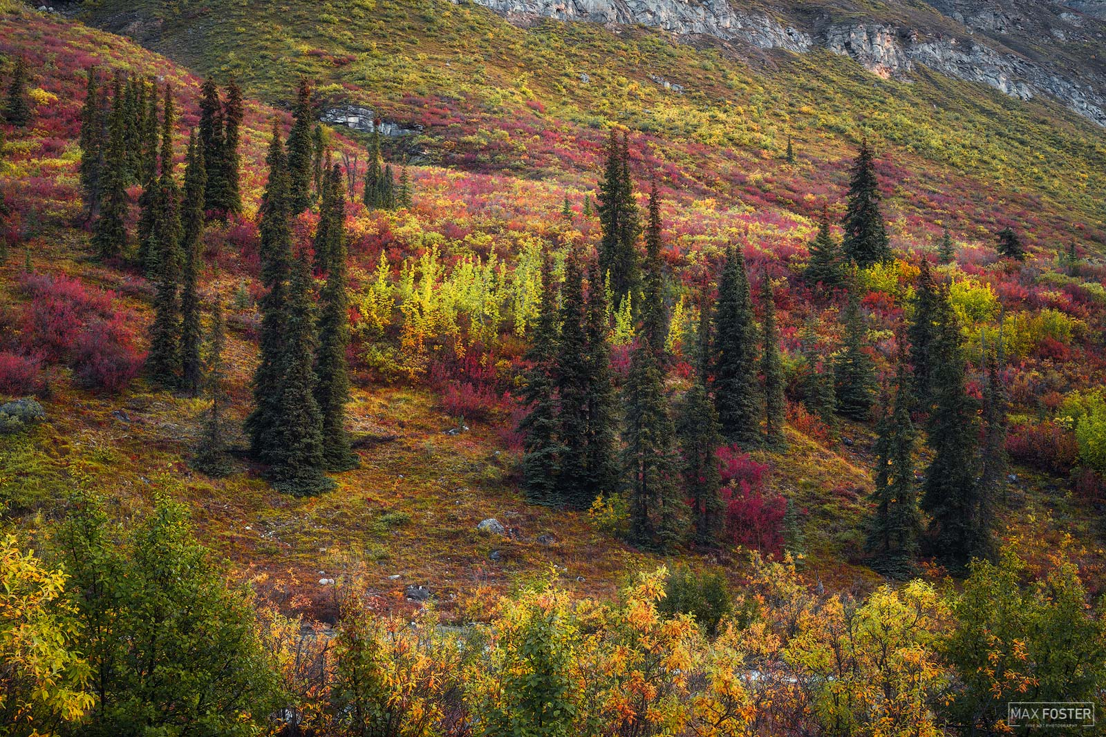 Arrigetch Peaks Wilderness, Gates of the Arctic National Park, Alaska, The Red Carpet, photo