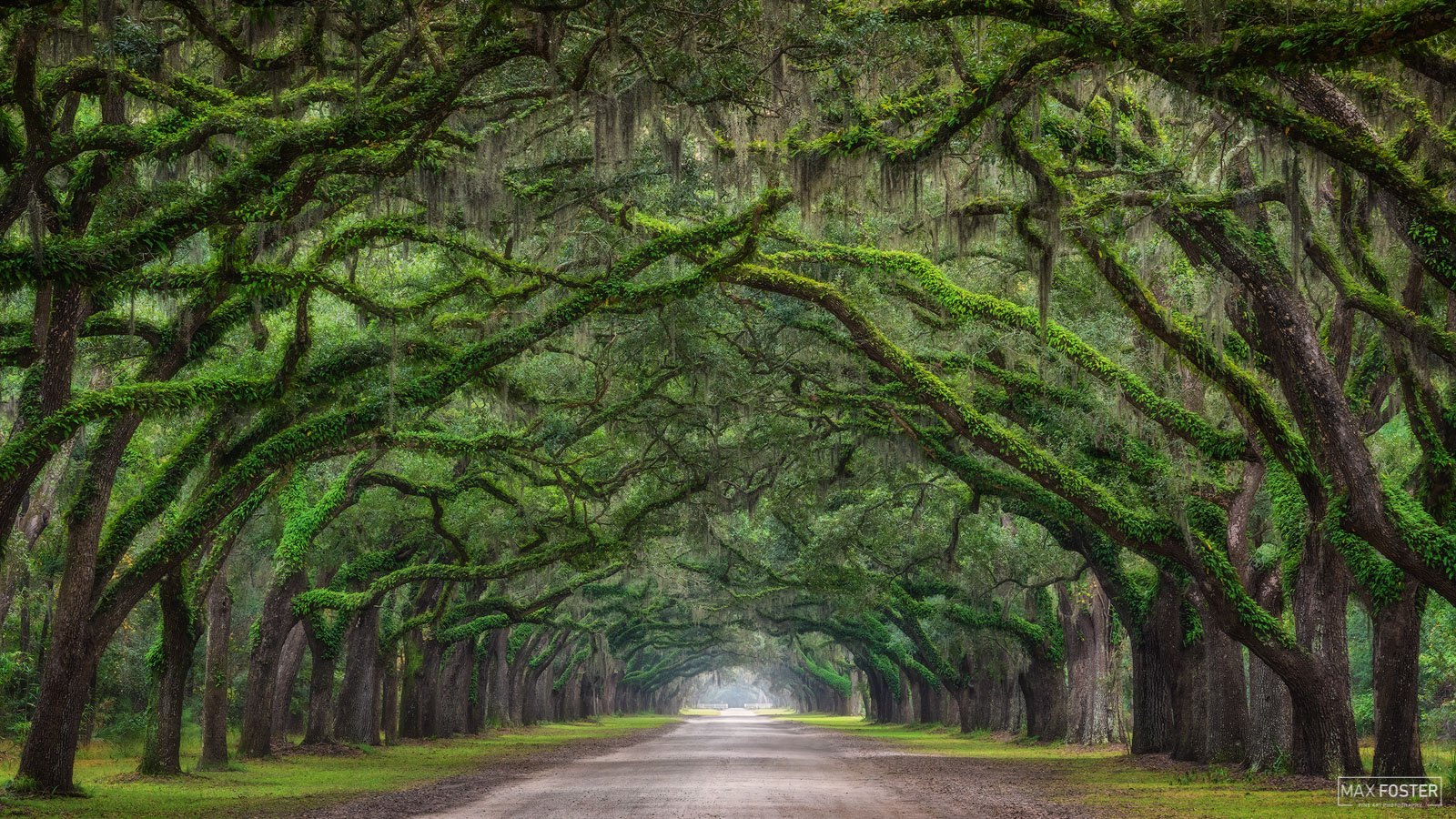 Wormsloe Plantation, Savannah, Georgia, Tunnel Vision, Tree Tunnel, Canopy, photo