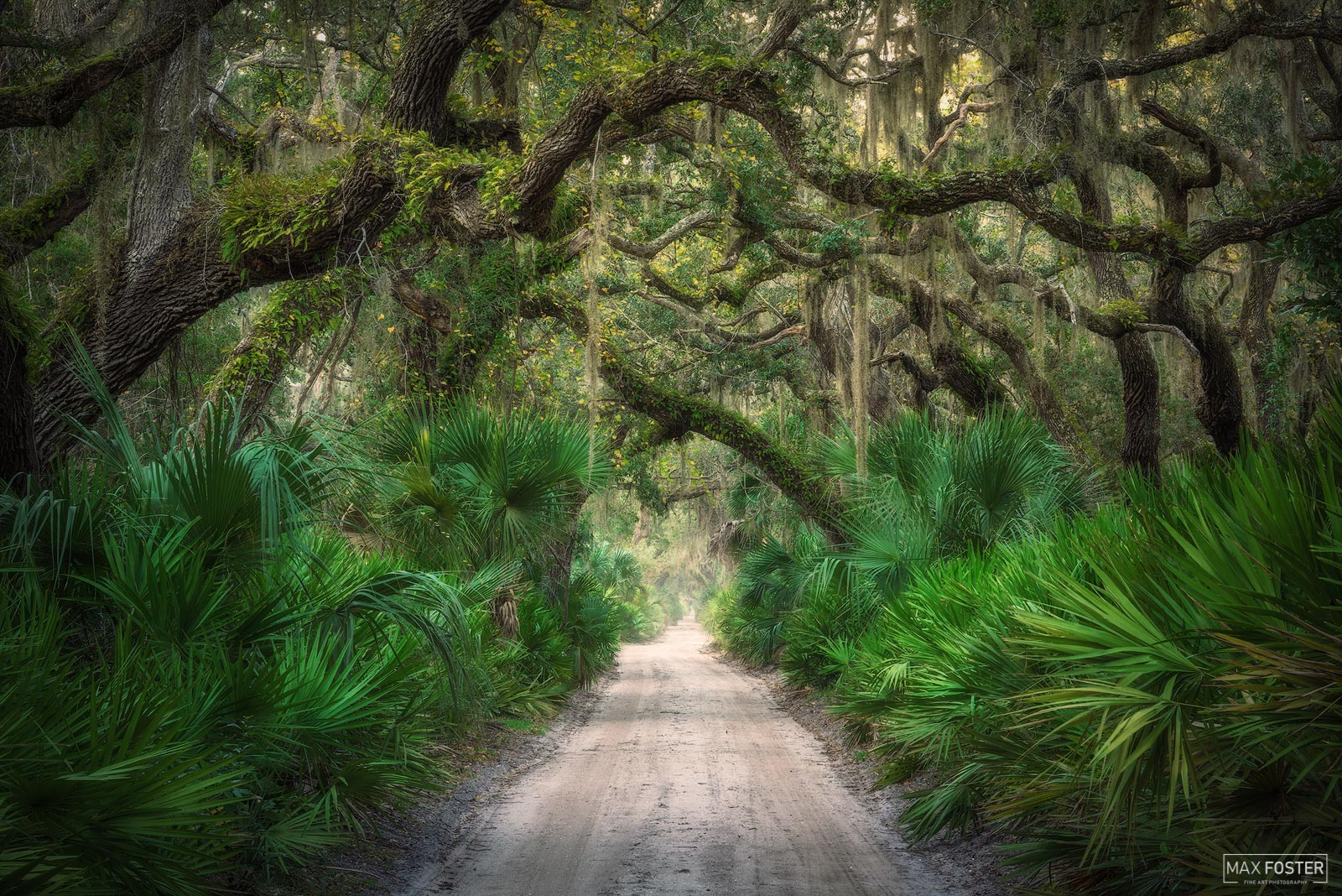 Fine Art Limited Edition of 50 Cumberland Island is the largest of the Sea Islands of Georgia. The island is 17.5 miles long...