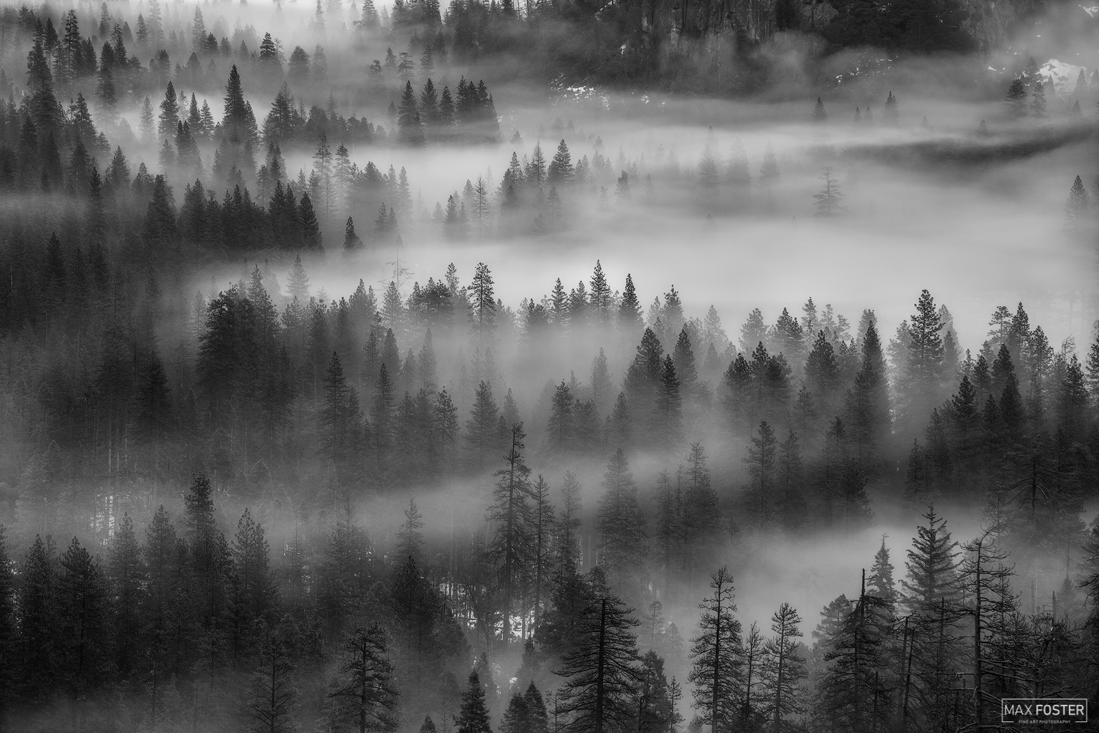 Fine Art Limited Edition of 50 The black and white or monochrome version of Whispering Pines, taken at Yosemite National Park...