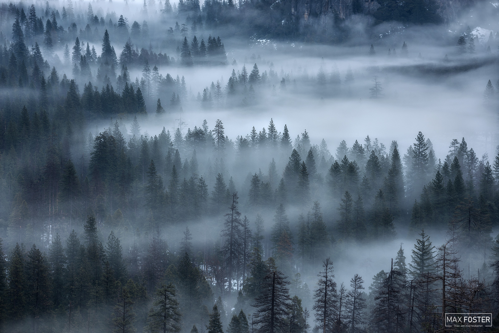 Yosemite National Park, California, Whispering Pines, Pine Trees, Evergreen, photo